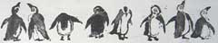Barbara Wichers Hoeth, Pinguins, Ets, 40x20 cm, €.240,-